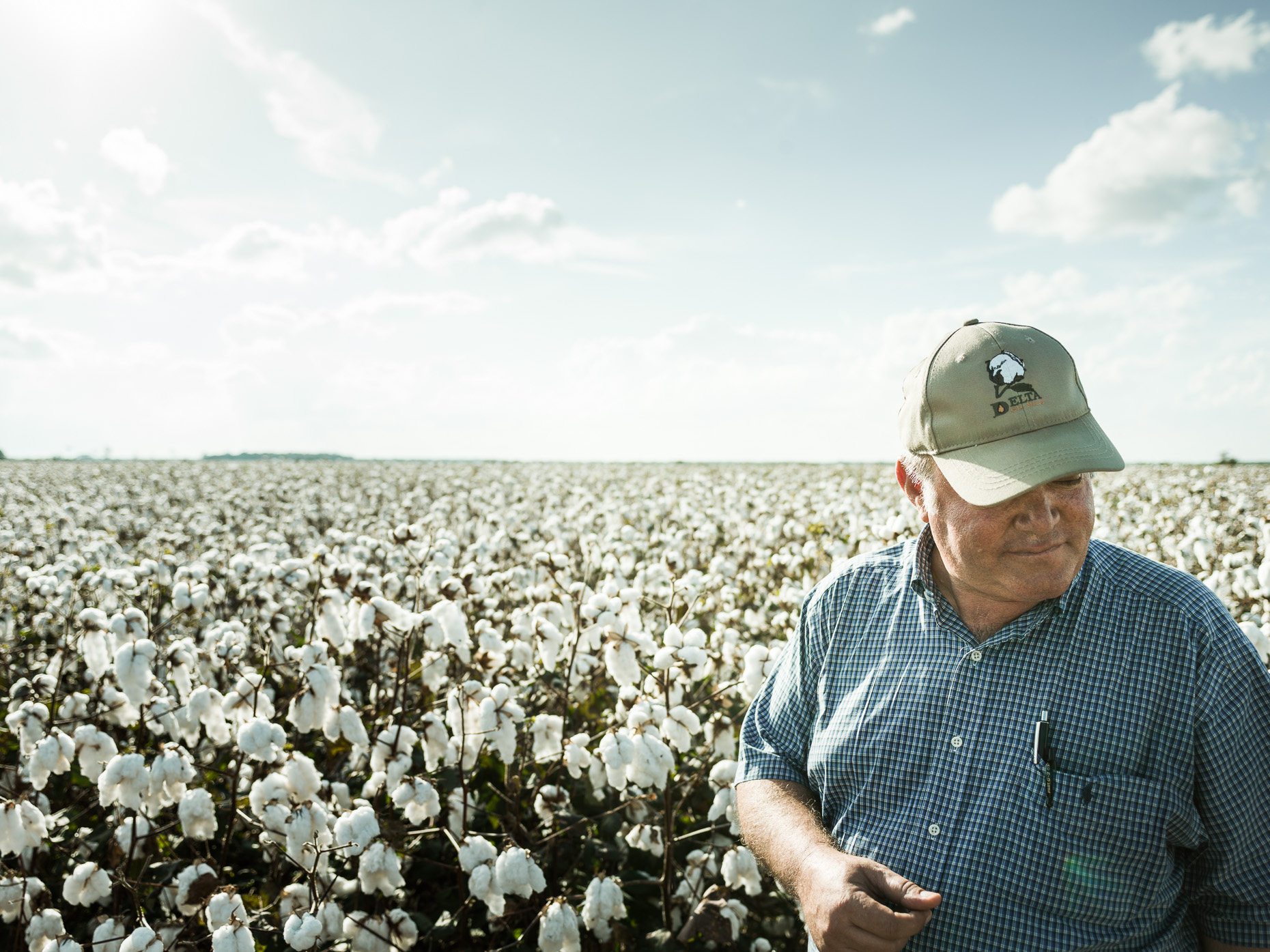 Mississippi_Cotton_CF014114