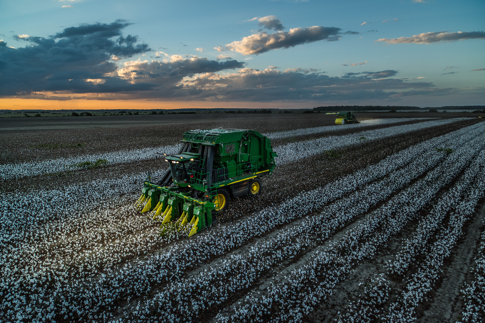 Mississippi_Cotton_DSC_6649